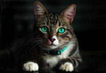 Vnímá vaše kočka paranormální jevy? Díky těmto signálům to poznáte!