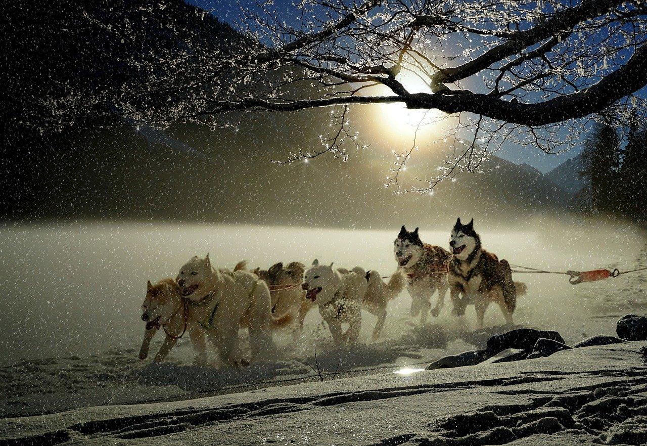 Nejznámější závod psích spřežení Iditarod.