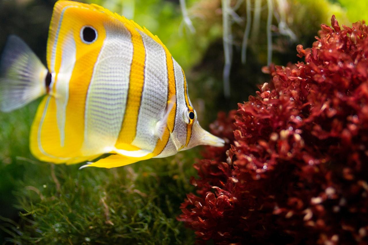 Pokud toužíte po akváriu, poradíme vám jak začít